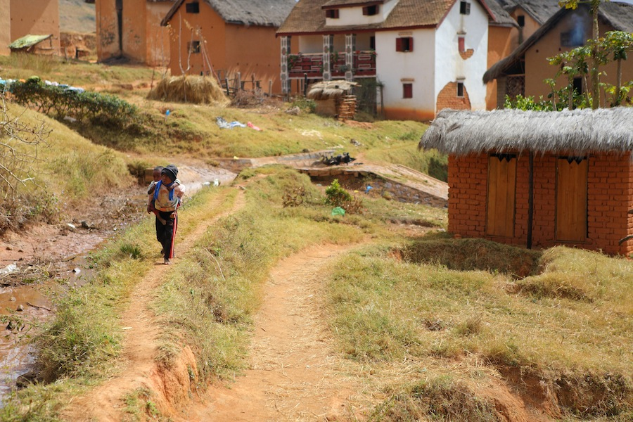 Rice fields II