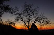 Il tramonto dietro l'albero
