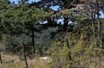 Il limitare del bosco