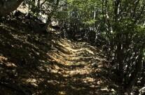 Attraversando la foresta